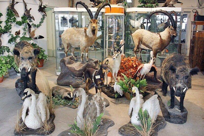 سه روز بازدید رایگان از موزه تنوع زیستی پارک پردیسان